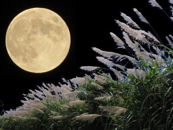 お月見画像